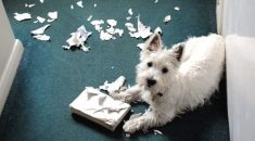 cachorro gosta de picar papel