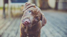 cachorro-inclina-cabeça