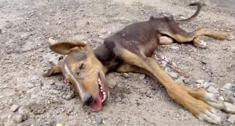 cachorro-irreconhecivel-apos-resgate-1