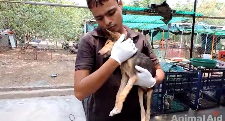 cachorro-irreconhecivel-apos-resgate-4