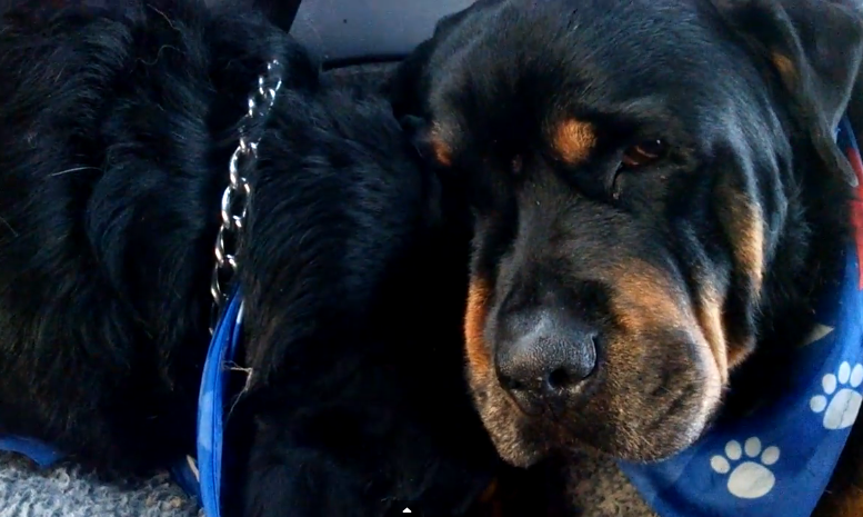 cachorro-lamenta-morte-irmao
