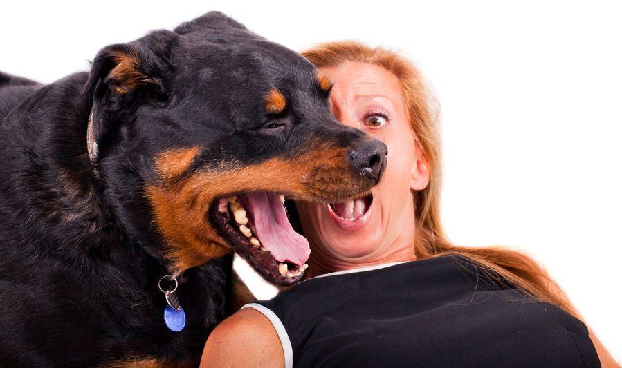 Dog Halitosis Home Remedies