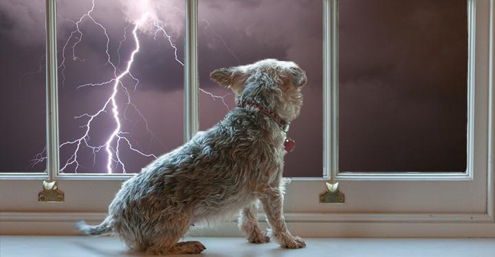 cachorro medo de trovão