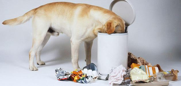 cachorro-mexe-lixo