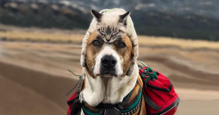 cachorro-ou-gato