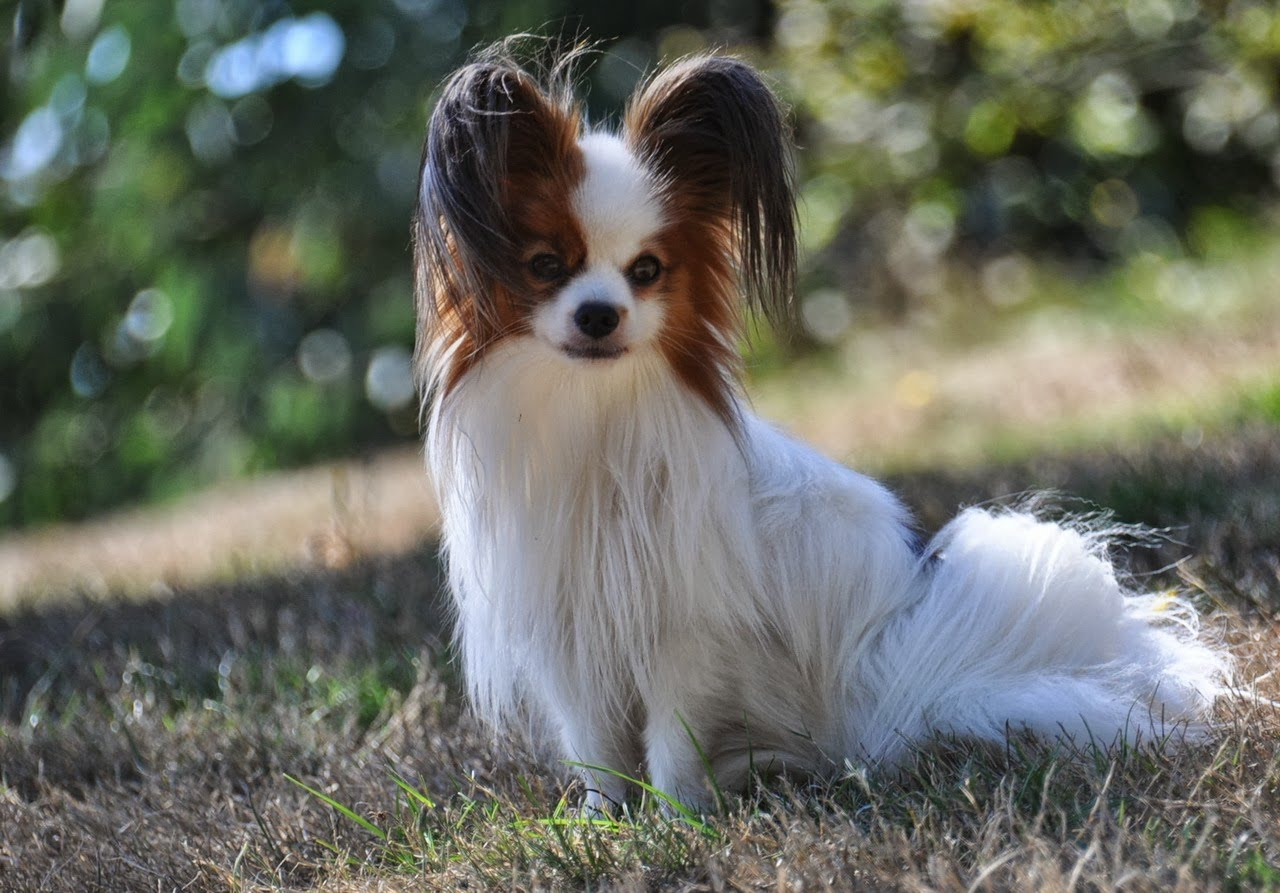 You Tube Dogs Getting Treats Sharing Stuffed Animal