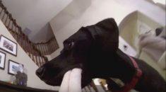 cachorro pau de selfie