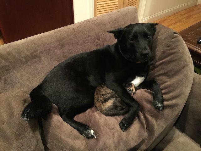cachorro-protegendo-gato
