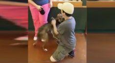 cachorro-reencontra-dono