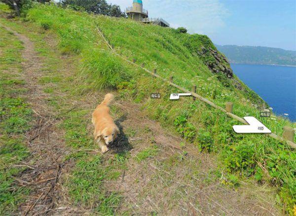 cachorro-segue-aparelho-do-google-street-view-e-aparece-em-todas-fotos-do-bairro-02