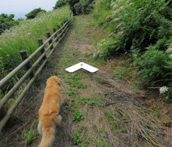 cachorro-segue-aparelho-do-google-street-view-e-aparece-em-todas-fotos-do-bairro-03
