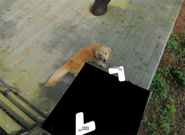 cachorro-segue-aparelho-do-google-street-view-e-aparece-em-todas-fotos-do-bairro-04
