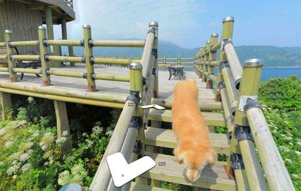 cachorro-segue-aparelho-do-google-street-view-e-aparece-em-todas-fotos-do-bairro-06