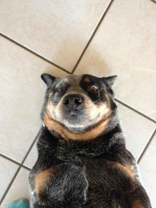 cachorro-selfie-03
