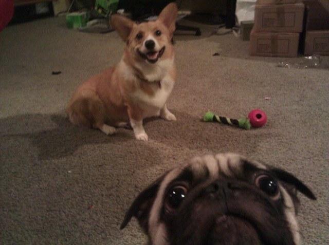 cachorro-selfie-09