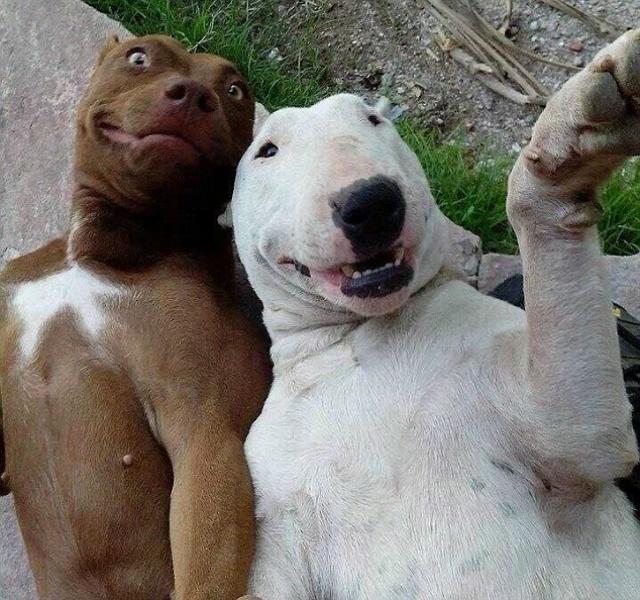 cachorro-selfie-10