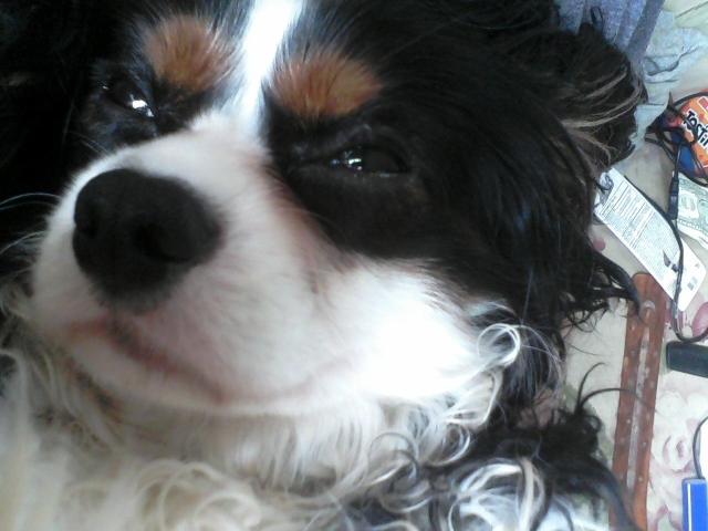cachorro-selfie-16
