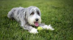 cachorro-subimisso