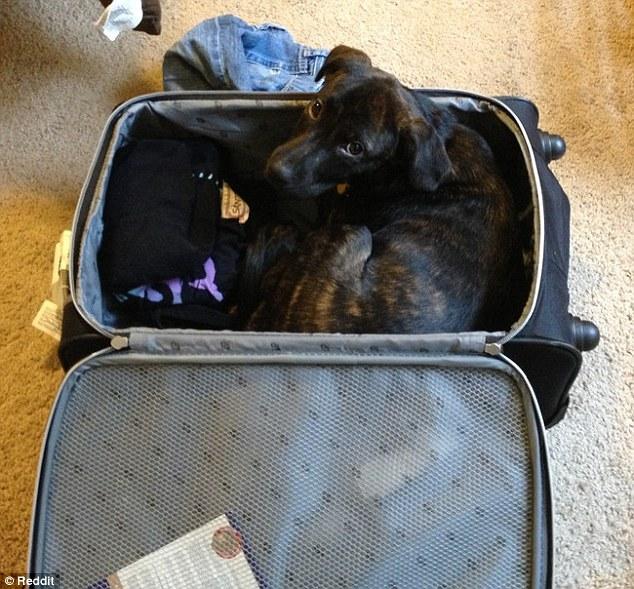 cachorro viagem 4