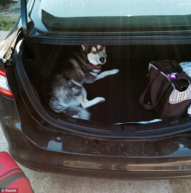 cachorro viagem 6