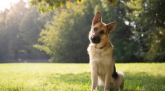 cachorro-vira-cabeca