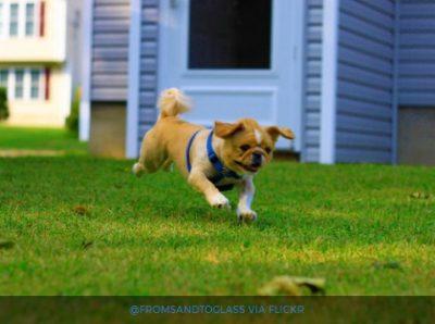 cachorro-viver-mais