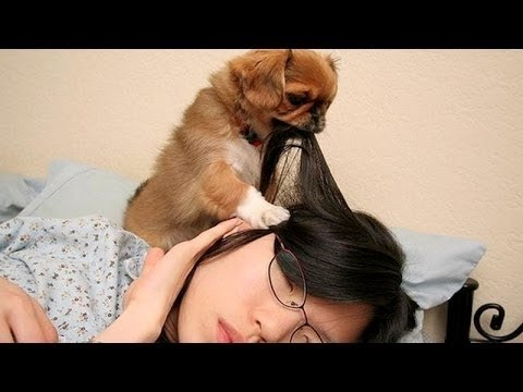 Youtube Funny Dog Videos