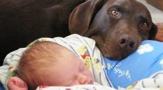 cachorros-colocando-bebe-pra-dormir