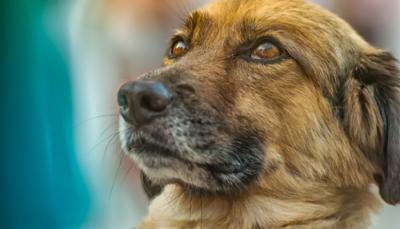 cachorros sabem identificar mentiras