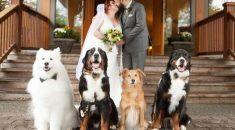 cachorros-estrelas-do-casamento