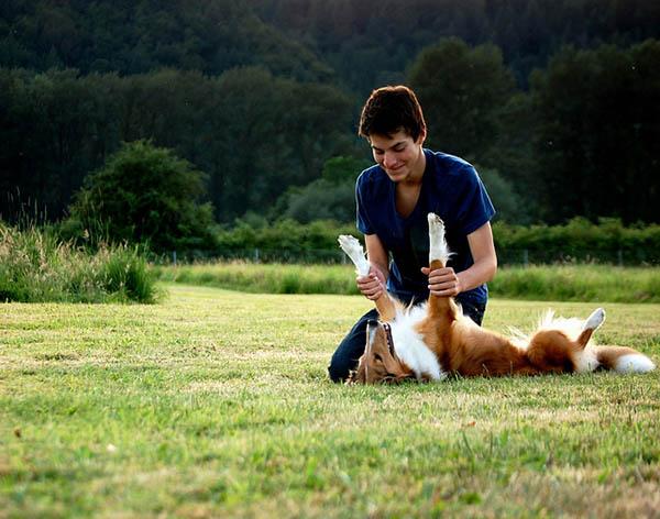 cachorros que brincam ficam menos estressados
