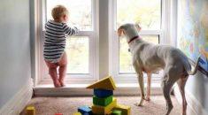cachorros-que-tinha-medo-de-tudo-se-sente-mais-seguro-com-seu-irmaozinho-humano