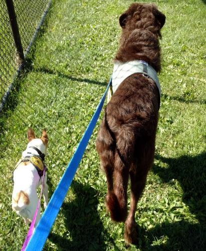 cachorros-abandonados-juntos-dao-amor-e-forca-um-para-o-outro-05