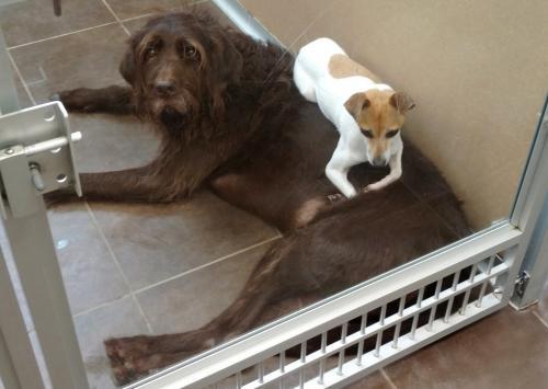 cachorros-abandonados-juntos-dao-amor-e-forca-um-para-o-outro-06