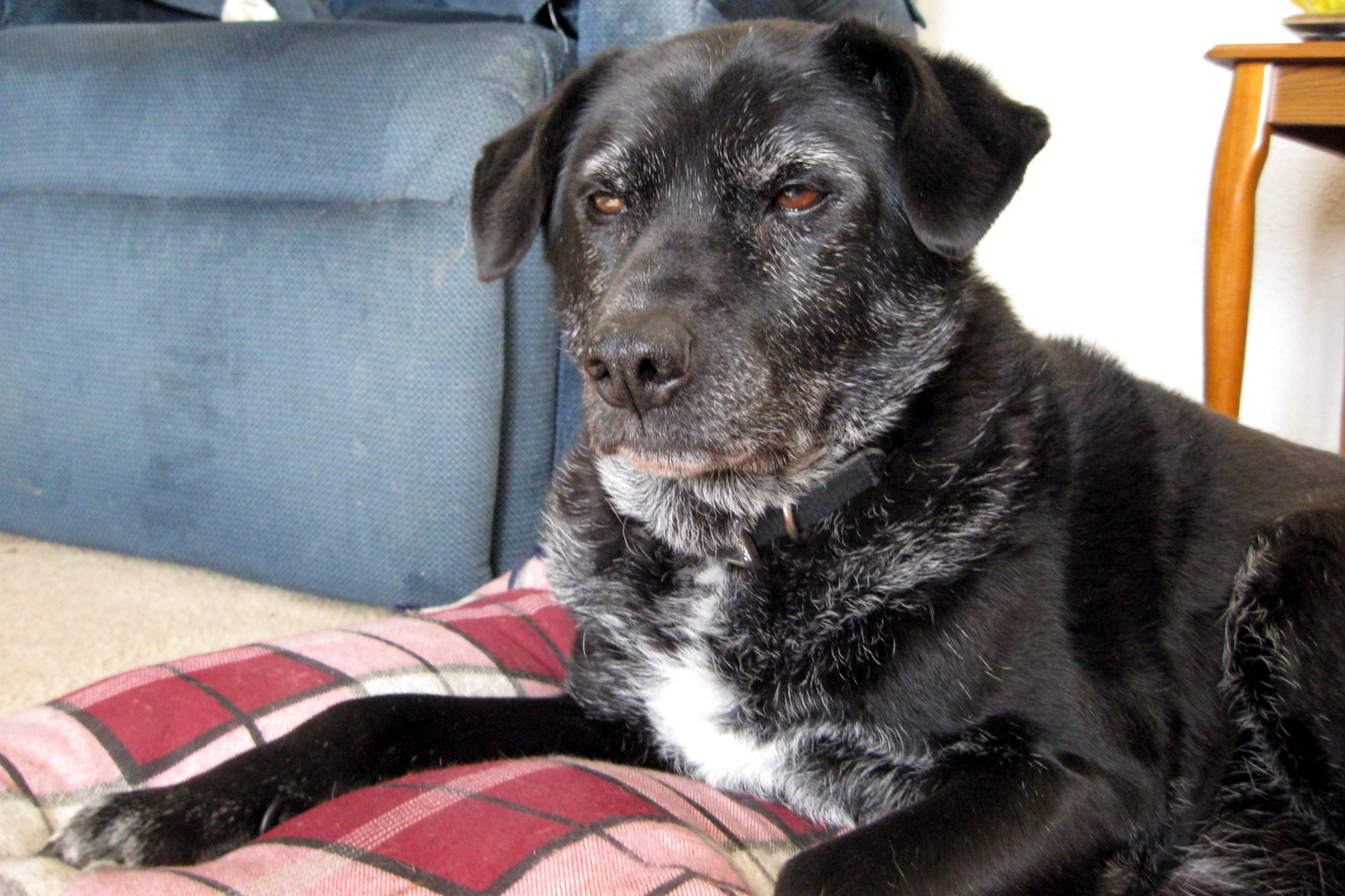 Senior Dogs For Adoption In Nh