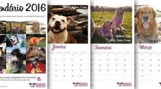calendario cachorro 2017