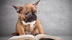 teste inteligencia canina
