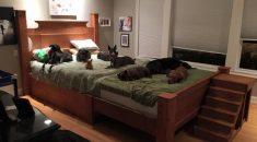 casal-cria-cama-grande-para-dormir-com-caes-e-gatos-04