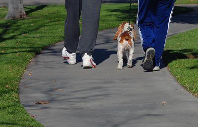 ensinar cachorro a nao puxar a coleira