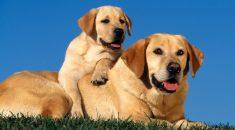 como calcular idade real dos cachorros