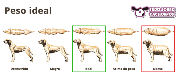 como saber se o cachorro esta gordo