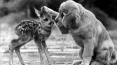 curiosidades sobre cachorros