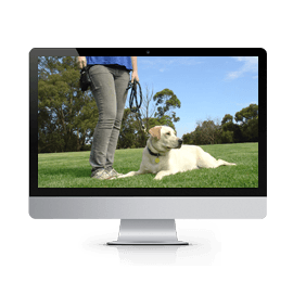 curso-educacao-canina