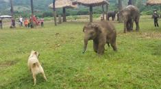 elefante cachorro