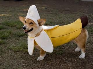 fantasia cachorro