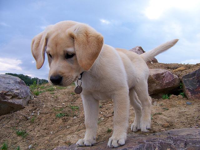 filhote cachorro 5