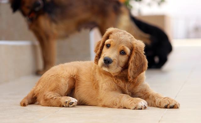 filhote cachorro 6