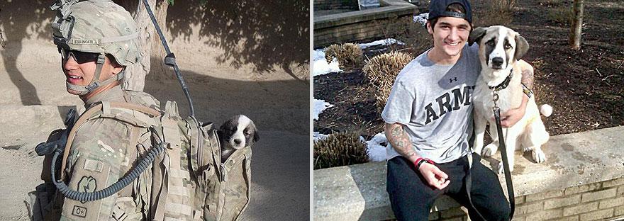 antes e depois filhote adulto