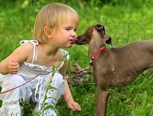 greyhound racas carinhosas