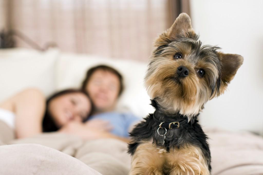 Hospedagem Familiar, uma opção melhor do que um simples hotel para cachorro